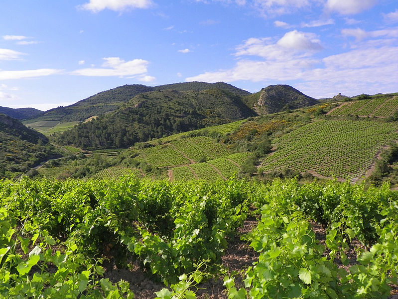 Languedoc Roussillon vineyard