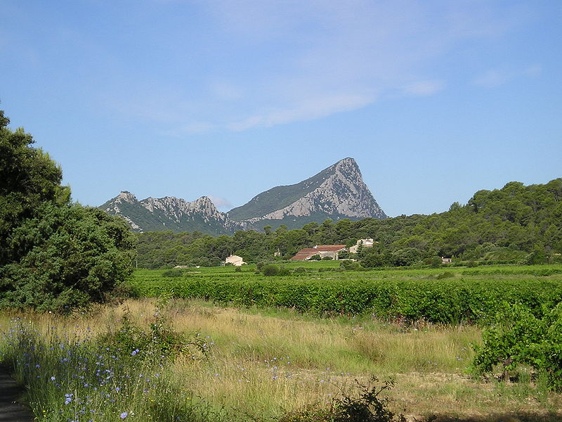 Languedoc Roussillon vineyard appellation Pic Saint Loup
