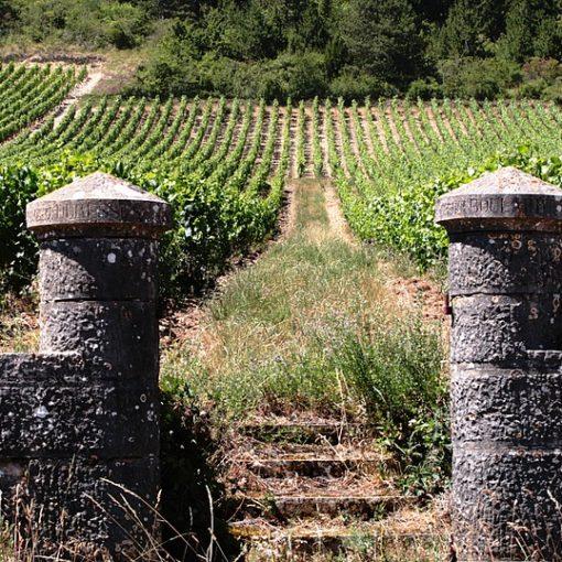 Vignoble de Bourgogne